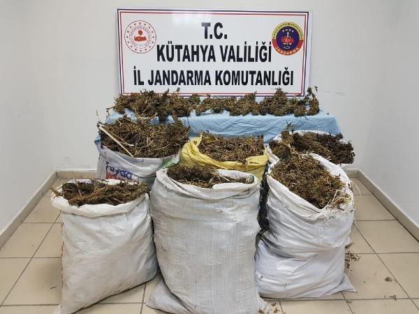 Tutuklunun evinde 38 kilo esrar ele geçirildi
