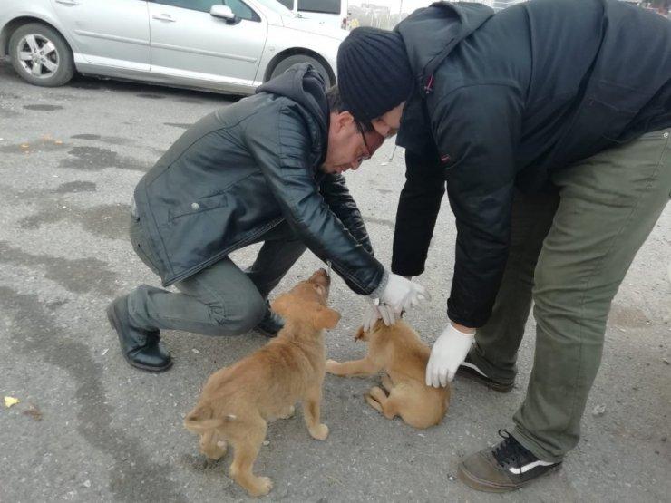 Kartepe zabıtasından sokak hayvanlarına şefkat eli