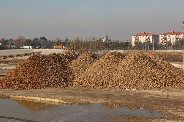 Malatya Şeker Fabrikasında 345 bin ton pancar işlendi