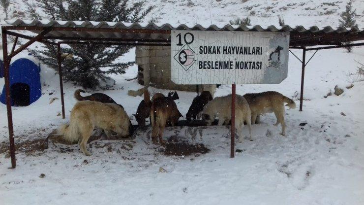 Gaziantep'te sokak hayvanlarını unutulmadı