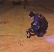 Direkte mahsur kalan kediyi itfaiye kurtardı