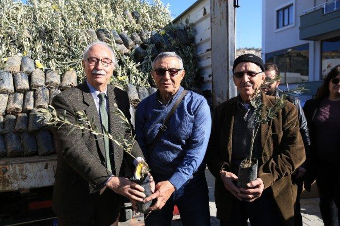 84 çiftçiye 3 bin 300 memecik zeytini fidanı dağıtıldı