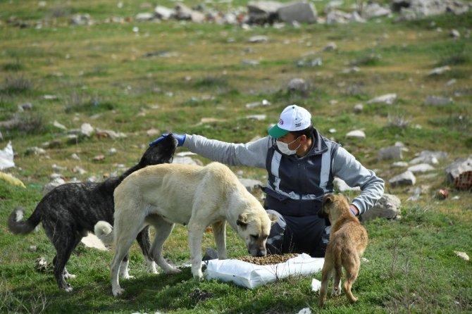 Konya'da sokak hayvanlarını beslemek için ek tedbir alındı
