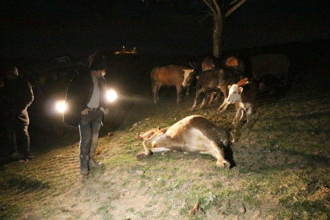 Yozgat'ta mandıra çöktü: 6 hayvan telef oldu