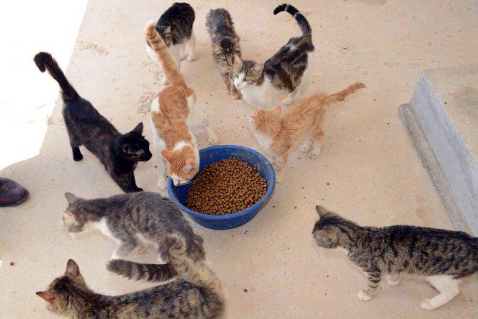 Konya Büyükşehir sokak hayvanları için yemek atıklarından mama üretecek