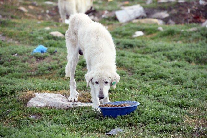 Konya'da, yemek atıklarından hayvanlar için mama üretilecek