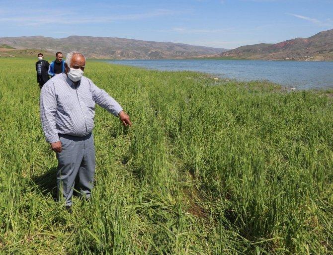 Siirt'te binlerce dönüm ekili arazi sular altında kaldı