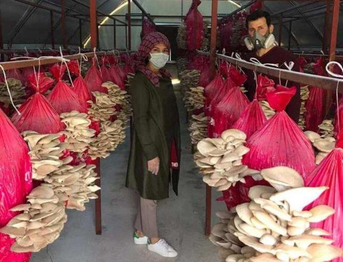 Devlet desteği ile mantar üretimine başladılar