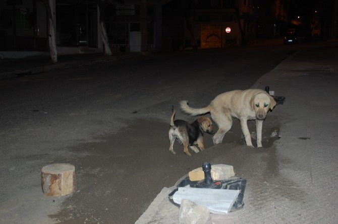 Sokaklar boşaldı, köpekler oyun yaptı