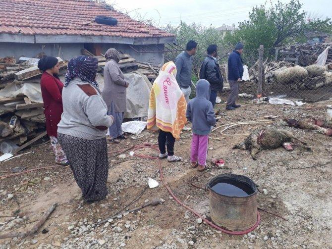 Konya'da ağıla giren kurtlar 20 koyunu telef etti