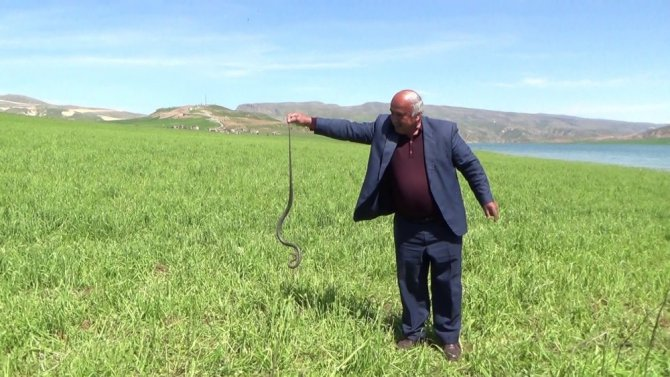 Eliyle yakaladığı yılanla fotoğraf çektirdi