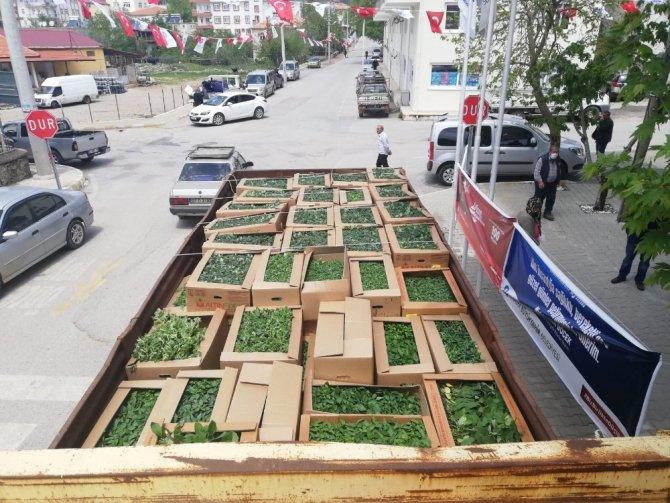 Büyükşehir'den çiftçilere fide desteği