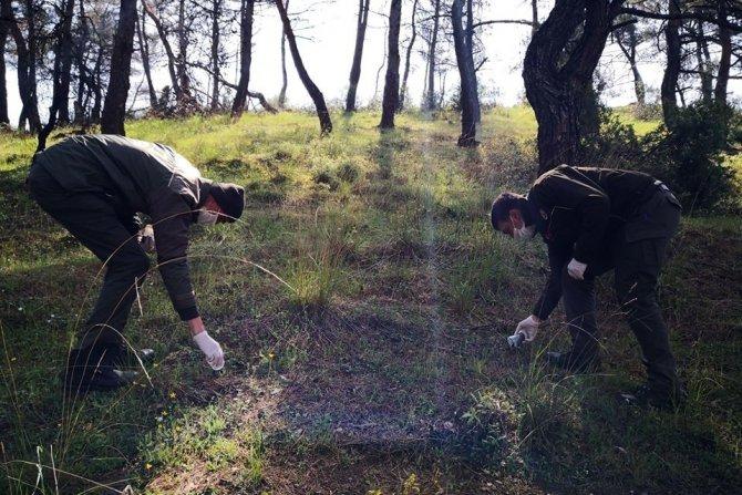 Ormanlarda biyolojik savaş