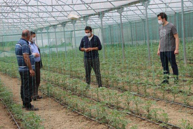 Devrekli çiftçileri korona virüs bile durduramıyor
