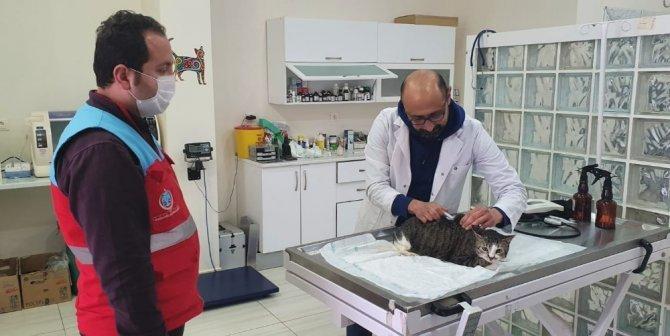 Vefa Sosyal Destek Grubu ekipleri, kedisi rahatsızlanan vatandaşın yardımına koştu
