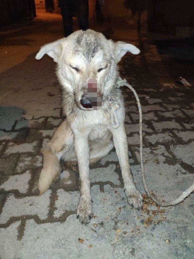 Hatay'da işkence yapılan köpek çöp konteynerinde ölüme terk edildi