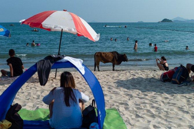 Hong Kong'da korona virüse rağmen halk, plajlara akın etti
