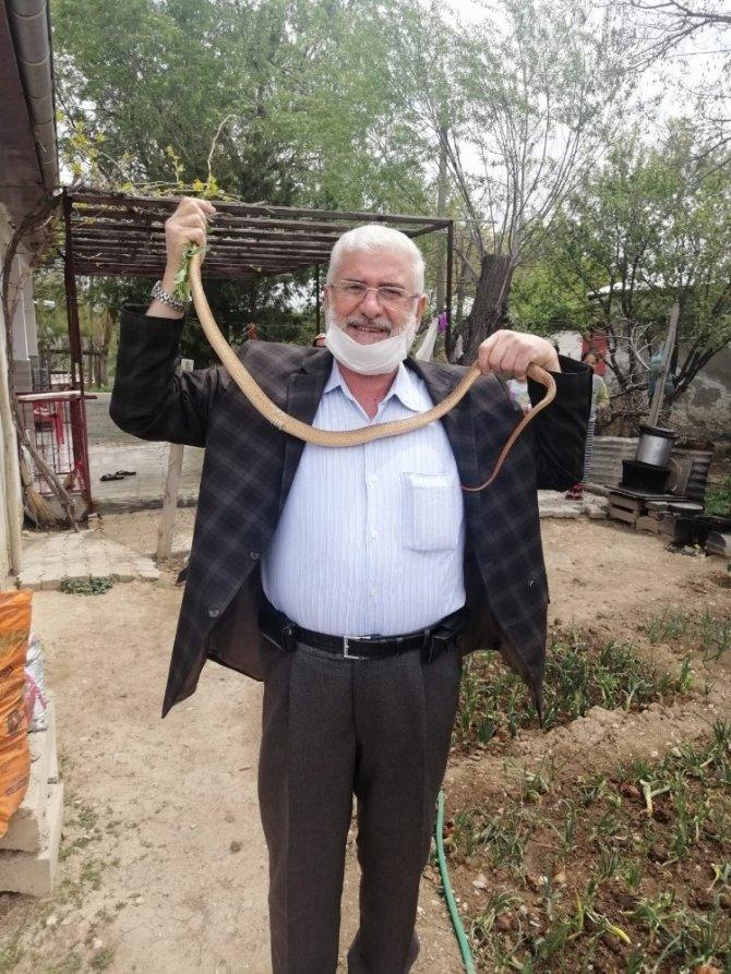 Eve giren 1,5 metrelik boz yılanı elleriyle yakalayıp doğaya saldılar