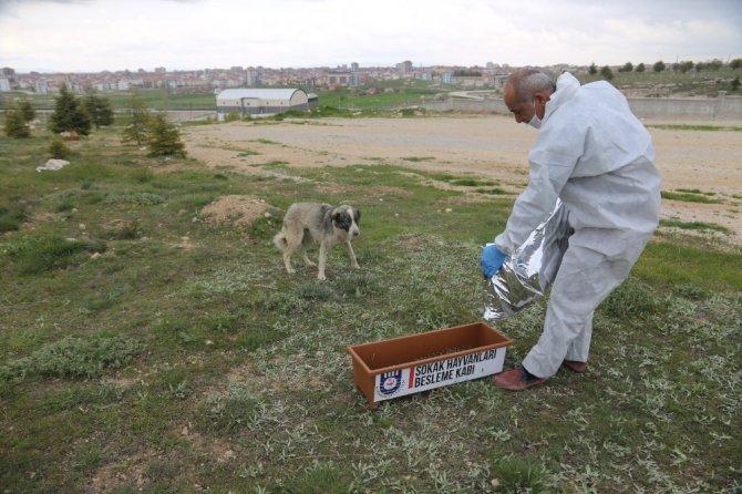 Karaman Belediyesi sokak hayvanlarını unutmadı