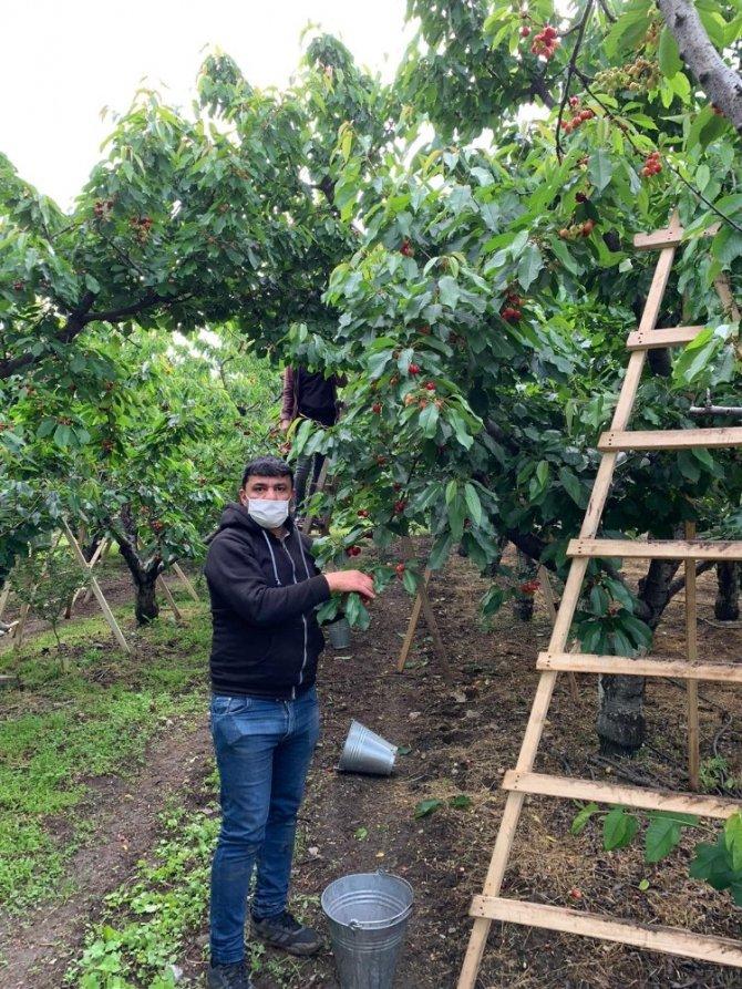 Gönüllüler meyve hasadına gidecek