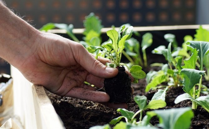 """Nilüfer Belediyesi'nden balkon tarımına teşvik """"Fidesi bizden ürün sizden"""""""