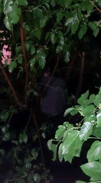 Kumar oynarken basıldı karanlıkta saklanmak için ağaca çıktı