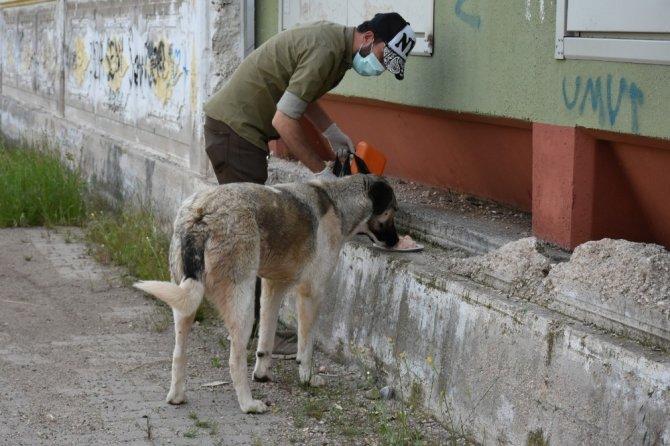 Sondakik editörleri sokak hayvanlarını unutmadı