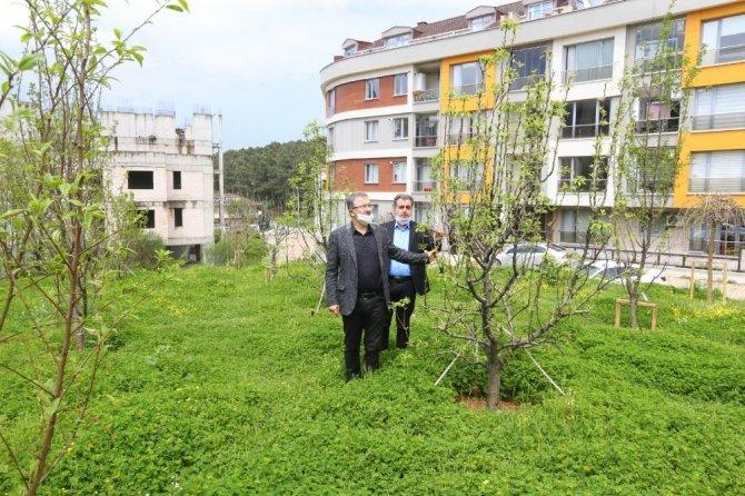 Göktürk'e meyve bahçesi yapıldı