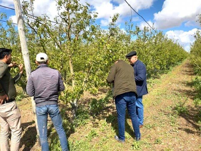 """Ziraat Odası Başkanı Bayram: """"Dolu üç köyümüzde ekili araziler ve elma bahçelerine ciddi zarar verdi"""""""