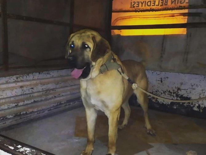 Yasa dışı köpek dövüştüren 10 kişiye 47 bin 760 lira ceza kesildi
