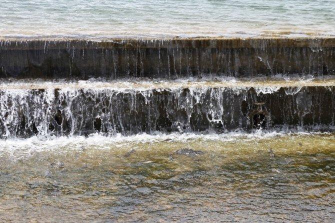 Balıklar yaşama tutunabilmek için tersine göç etmeye çalışıyor