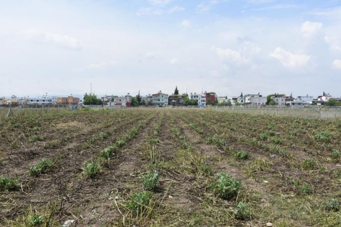 Tarsus Belediyesi, 'Zehirsiz Sofralar Kuruyoruz' projesini hayata geçiriyor