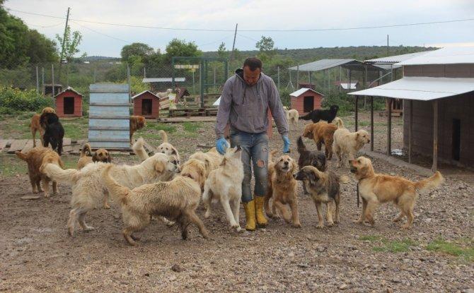 Sokak hayvanları için çiftlik kurdu, 500 köpeği besleyip sahiplendiriyor