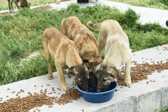 Başkan Altay: Konya'daki sahipsiz hayvanlarımızı aç bırakmayacağız
