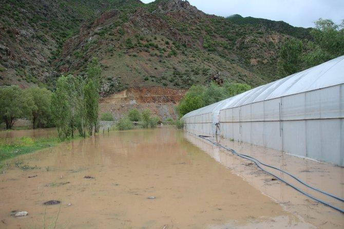 Oltu Çayı taştı, ekili araziler zarar gördü