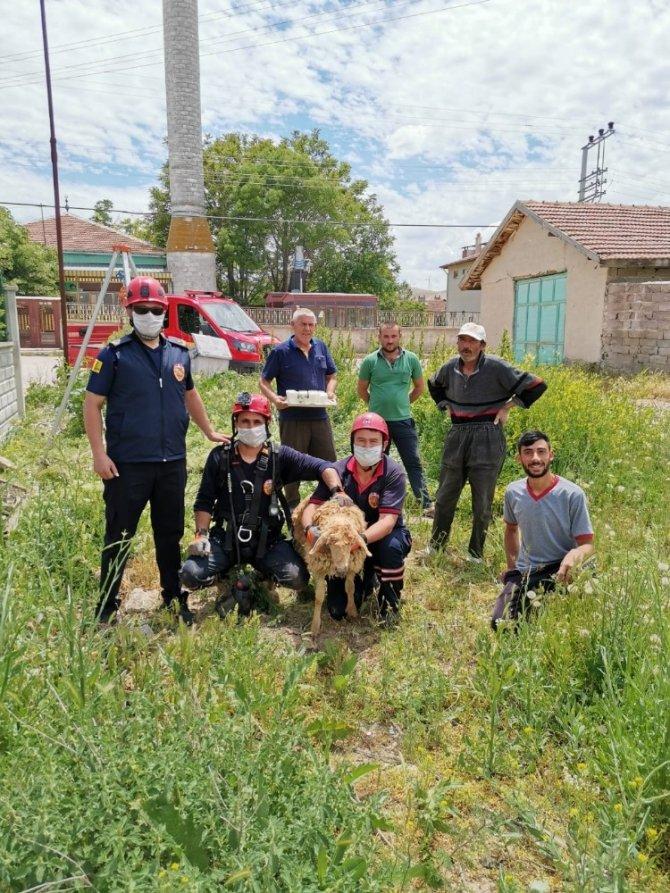 Konya'da kuyuya düşen kuzu kurtarıldı