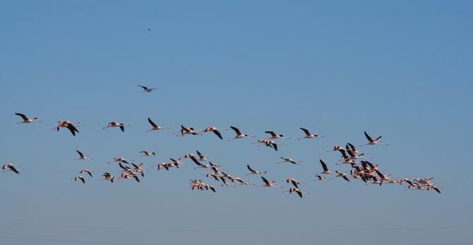 Flamingolar, Tuz Gölü'ne renk kattı