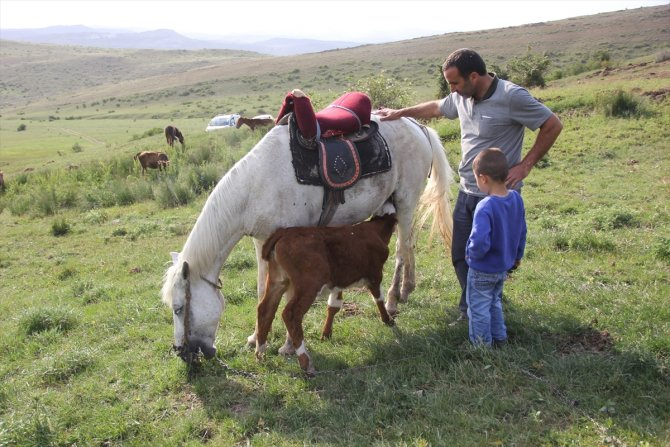 Kurdun yediği ineğin danasına at sahip çıktı