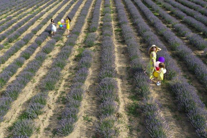 Türkiye'nin mis kokulu mor tarlaları görsel şölen sunuyor