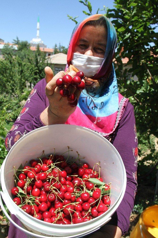 Konya'da kiraz üreticisi ürünün dalında kalmasından endişe ediyor