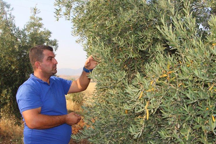 Devlet desteği alan çiftçi, köyüne istihdam getirdi