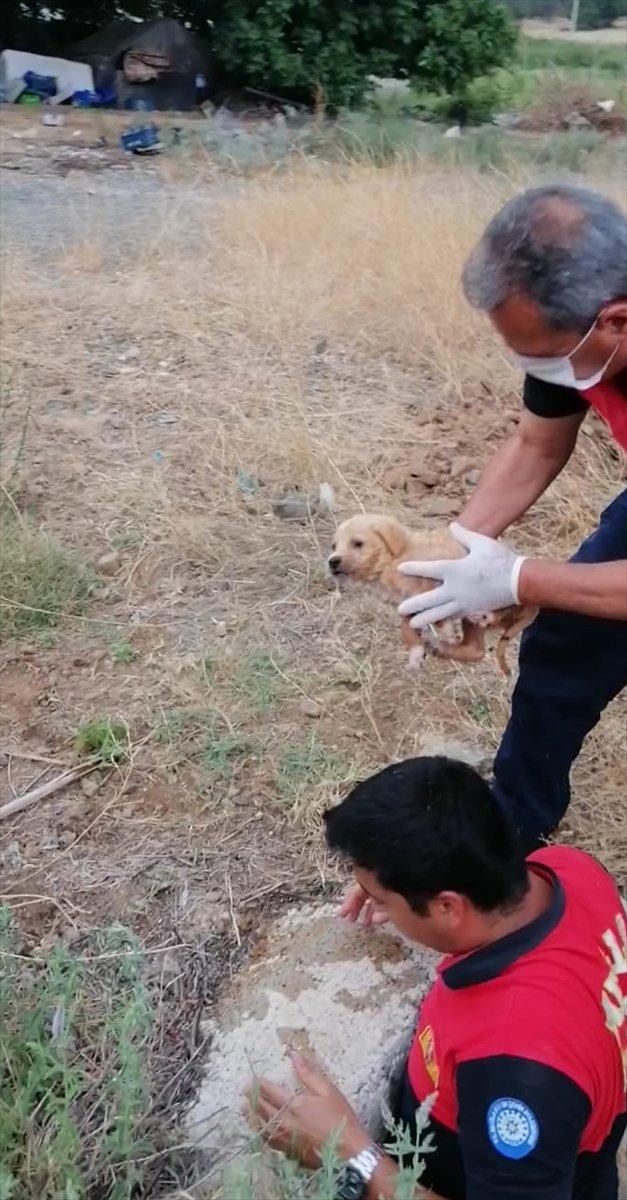 Muğla'da su borusunda mahsur kalan yavru köpek kurtarıldı