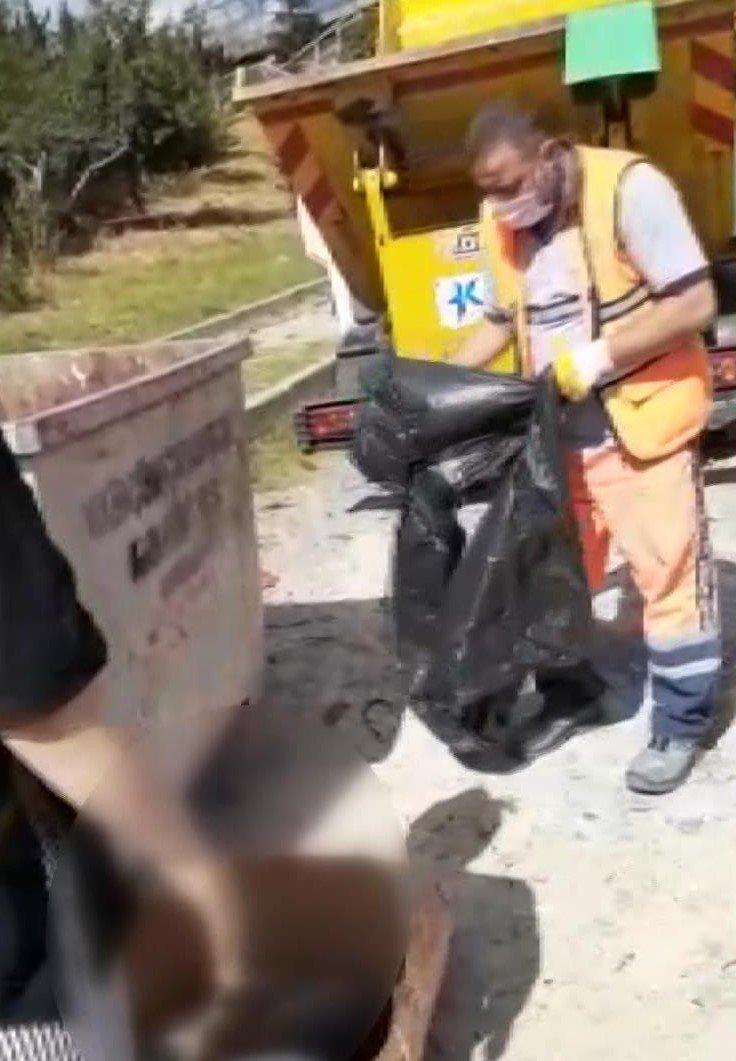 Çöp konteynerinde 16 kedi ölüsü bulundu