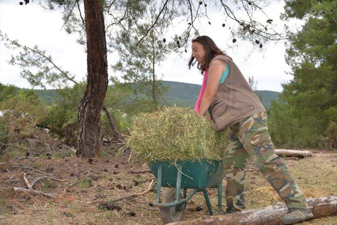 Köyde keçi güden 'Nişantaşı kızı' sürüsünü de işini de büyüttü