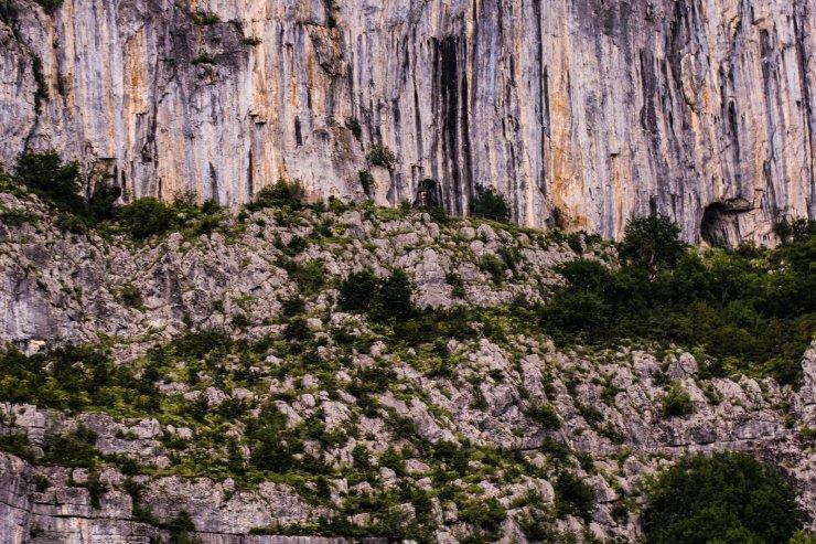 Küre Dağları Milli Parkı'nda endemik bitki türü keşfedildi