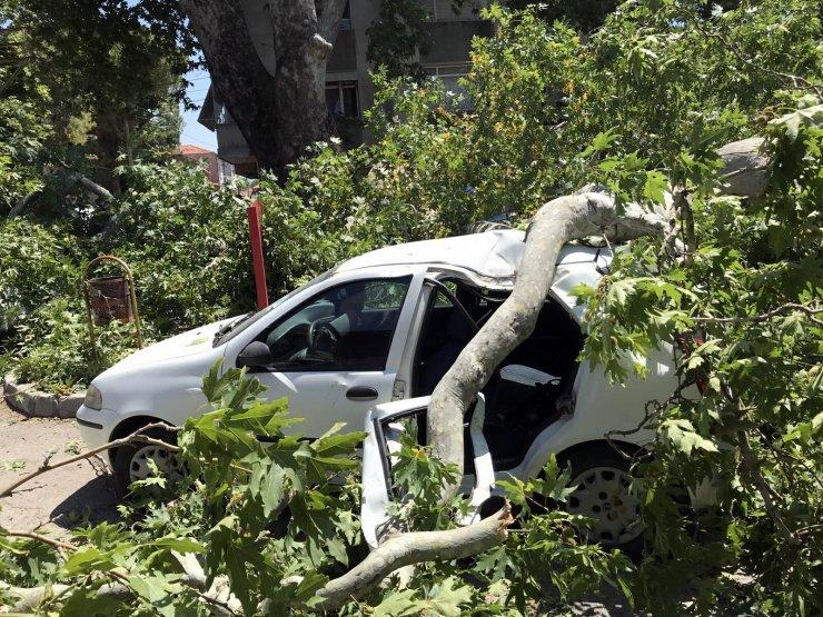 650 yıllık çınar ağacı devrildi: 3 otomobil ve 1 evin duvarı hasar gördü