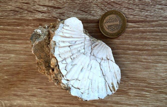Orta Toroslar'da bulunan deniz canlısı fosilleri heyecanlandırdı