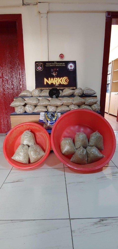 Kilolarca bonzai maddesi ele geçirildi