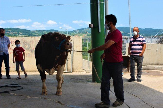Kocaeli'de kurban pazarları sakin olmasına rağmen satıcılar memnun