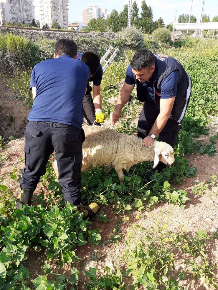 Şantiyede 2 saat arayla aynı çukura düşen köpek ve koyun kurtarıldı
